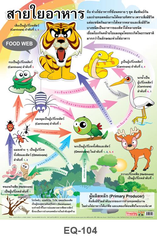 โปสเตอร์กระดาษเรื่องสายใยอาหาร #EQ-104 แผ่นภาพโปสเตอร์สื่อการเรียนรู้ ประกอบการศึกษา