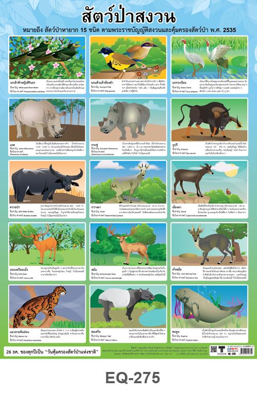 โปสเตอร์กระดาษ สัตว์ป่าสงวน #EQ-275 แผ่นภาพโปสเตอร์สื่อการเรียนรู้ ประกอบการศึกษา
