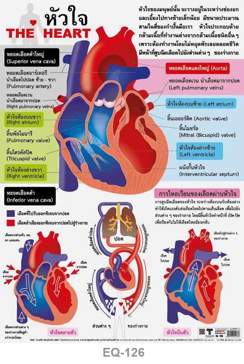 โปสเตอร์กระดาษ หัวใจ #EQ-126 แผ่นภาพโปสเตอร์สื่อการเรียนรู้ ประกอบการศึกษา