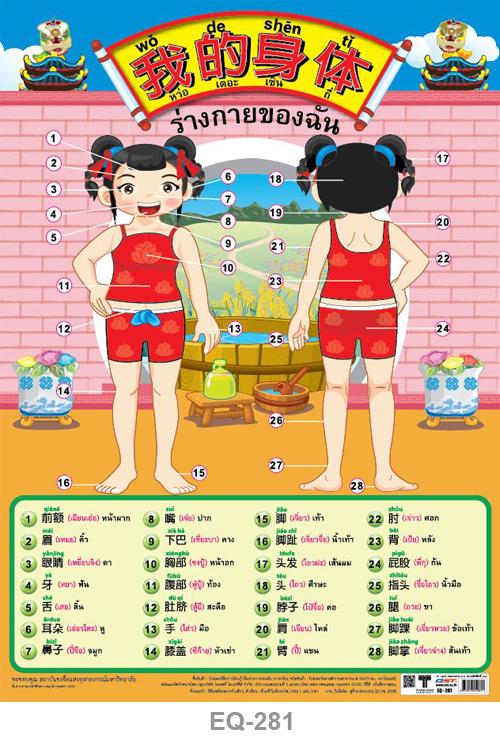 โปสเตอร์กระดาษเรื่องร่างกายของฉัน (ภาษาจีน) #EQ-281 แผ่นภาพโปสเตอร์สื่อการเรียนรู้ ประกอบการศึกษา